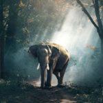 ゾウの遺伝子がガン治療に役立つ可能性が!?ゾウの持つガンに打ち勝つメカニズムを調べてみた