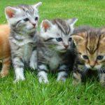 ハワイの猫島!?ラナイ島のラナイキャットサンクチュアリは猫たちの楽園だった